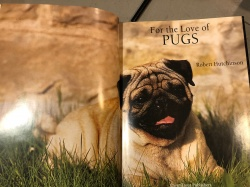 For the Love of PUGS Easton Press